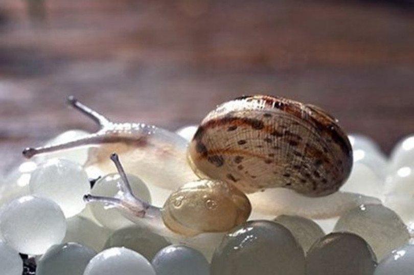 Made In Greece: Λευκό χαβιάρι από σαλιγκάρια 3.200€ – 30 μαθητές & 1 κοσμήτορας οι δημιουργοί
