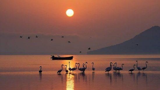 Φωτογραφία της ημέρας: Τα φλαμίνγκο υποδέχονται τον ήλιο στη λίμνη Κερκίνη – Κόβει την ανάσα το «κλικ» του Ηλία Νικολούλη